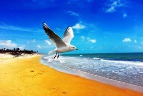 Seagull on a sand beach