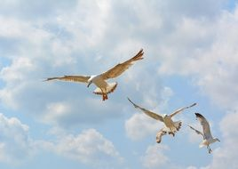 Seagulls in a flight