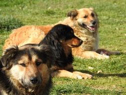 three different purebred dogs on green grass