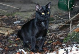 black domestic cat sitting on the ground