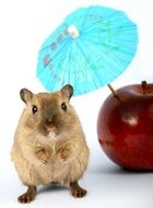 cute hamster and apple with cocktail umbrella