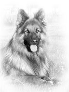 portrait of a german shepherd