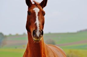 portrait of a graceful farm horse