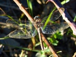 dragonfly with shiny wings on a branch
