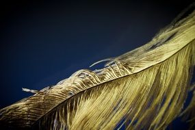 Strauss feather structure macro photo