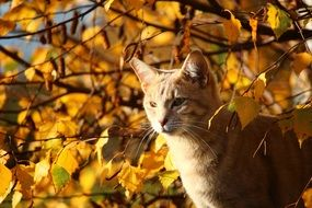 red kitten in the autumn forest
