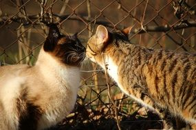sniffing each other cats