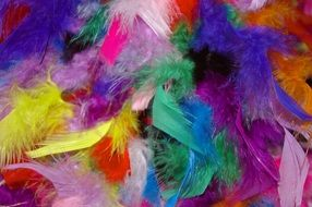 deco Colorful Feathers