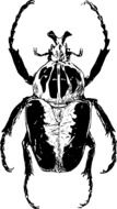 black white drawing of african beetle