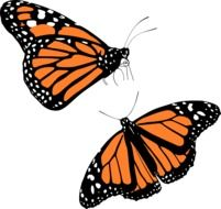 drawing of two monarch butterflies