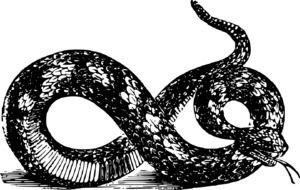angry snake, black and white drawing