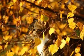 cat in Golden foliage