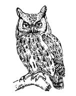 drawing of a screech owl