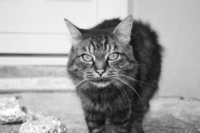black and white photo of a homeless cat