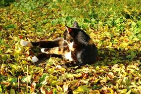cat lies in the autumn foliage