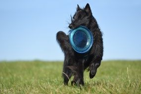 picture of the black dog is playing frisbee