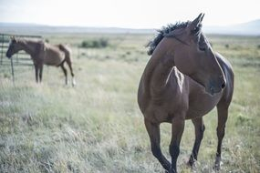 Brown Horses on a pasture