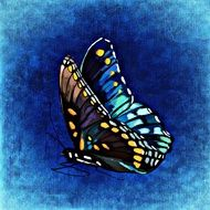 graphic image of a bright butterfly