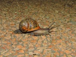 crawling snail on the road