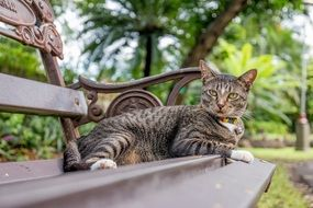cute lovely Thailand cat