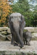 Elephant with baby Zoo