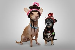little dogs in warm hats