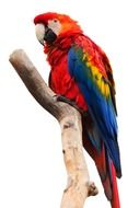 colorful macaw parrot on a branch