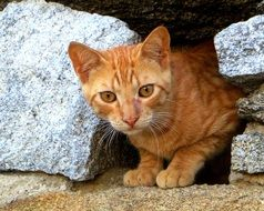 red Young Cat among grey stones