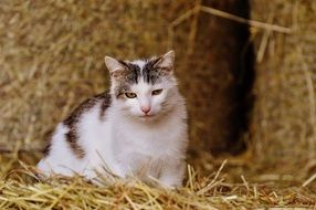 white cat lying on straw