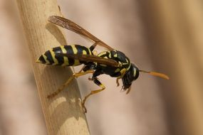 closeup of a wasp in wildlife