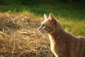 young red cat in the evening garden