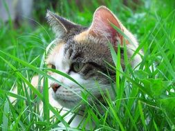 domestic cat hiding in green grass