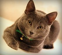 beautiful well-groomed cat