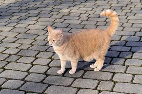 cute lovely Domestic Cat