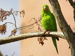 green tropical parrot on a tree in the park