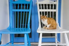 sitting cat on a chair