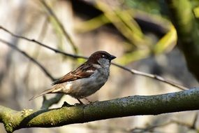 sparrow sitting on a tree branch