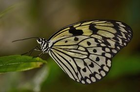 black yellow butterfly in wildlife