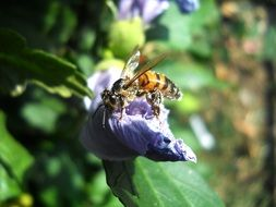 closeup picture of wasp on a purple flower