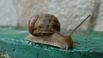 Snail Macro Green surface