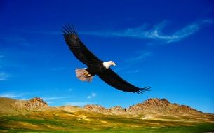 eagle flies over the mountains