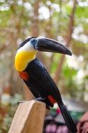 a toucan with a big beak at the zoo