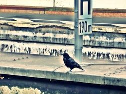 bird on the platform of the railway station