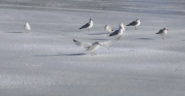 seagulls standing on the frozen lake
