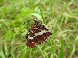 brown butterfly on the grass blade