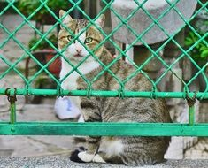Cat near the fence
