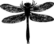 Black and white dragonfly drawing clipart