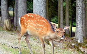 young deer in the wild forest