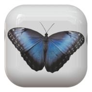 Button of butterfly in blue and black color