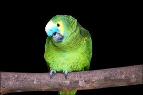 green parrot sits on a branch in a cage